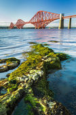 Close Up seaweed and Forth Road Bridge — Stock Photo