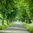 Stock Photo: Abstract driving on forest road