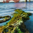 Stock Photo: Seaweed and Forth Road Bridge in Scotland