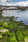 Seaweed on a rock under the bridge in Scotland — Stock Photo