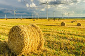 View of electric windmills in summer — Stock Photo