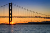 Birds flying at sunset under the bridge in Scotland — Stock Photo