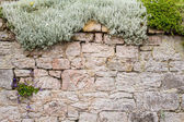 Old medieval wall covered with plants — Stock Photo