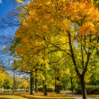 Yellow tree in the autumn park — Stock Photo