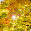 Sun beam through autumn leaves background — Stock Photo