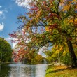 Colorful autumn trees in the park by the river — Stock Photo #13821245