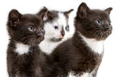 Closeup three small kitten isolated on white background — Stock Photo