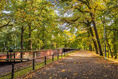 Footpath in park during the autumn — Стоковое фото