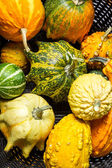 Wicker basket full of colorful pumpkins — Stock Photo