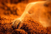 Aroma of coffee seeds roasting — Stock Photo