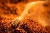 Aroma of coffee seeds roasting — Stock Photo