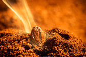 Grain roasted coffee aroma emitting — Stock Photo