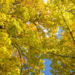 Stock Photo: Autumn leaves and blue sky