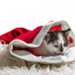 Kitten in a Santa Claus hat on white carpet - Stock Photo