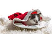 котенок в шапке санта-клауса на белый ковер — Стоковое фото