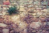 植物の背景と固体黄色の石 — ストック写真