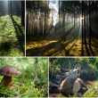 Wild flora and fauna in the forest — Stock Photo