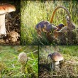 Wild mushrooms in forest — Stock Photo
