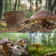 Stock Photo: Collecting wild mushrooms in forest