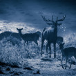 Deer with herd roaring on the meadow at moonlight - Stock Photo