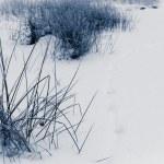 Winter background at lake no. 1 — Stock Photo #19831129