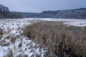 Frozen swamp covered with snow in the winter — Stock Photo