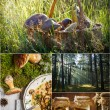 Taste of the forest straight from the plate — Stock Photo