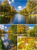 Goldener herbst-park — Stockfoto