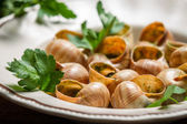 Closeup of baked snails with garlic butter — Stock Photo
