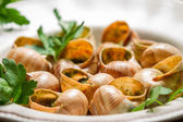Closeup of baked snails with garlic butter and parsley — Stock Photo