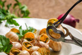 How to consume snails fried in garlic sauce — Stock Photo