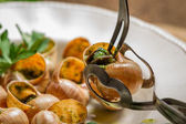 Closeup of consume snails fried in garlic sauce — Stock Photo
