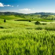 Green fields of wheat in Tuscany, Italy — Stock Photo #26578407