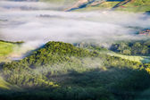 Misty forest hill in Tuscany — Stock Photo