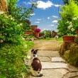 Stock Photo: Two cats in ancient garden