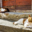 Two cats basking in the sun on the porch — Stock Photo