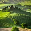 Stock Photo: Farm of olive groves and vineyards