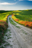 Beautiful view of the tortuous path at sunset in Tuscany — Stock Photo
