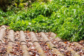 Old roof covered with green plants — Stock Photo