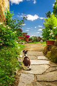 Two cats in ancient garden — Stock Photo