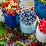 Closeup of collecting fresh wild berries — Stock Photo