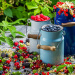 Freshly collecting wild berry fruits — Stock Photo #29549159