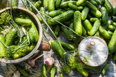 Pickling cucumbers in a clay pot — Stock Photo
