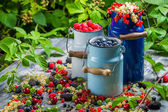 Freshly collecting wild berry fruits — Stock Photo