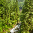 Mountain stream in a forest — Stock Photo
