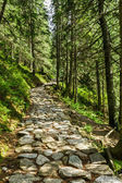 Stone path between the trees in the mountains — Stock Photo