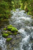 Rushing mountain stream in the forest — Stock Photo
