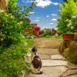 Stock Photo: Cats in ancient garden, Italy