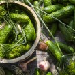 Fresh pickling cucumbers in countryside — Stock Photo #30812019