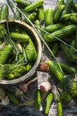 Fresh pickling cucumbers in the countryside — Stock Photo